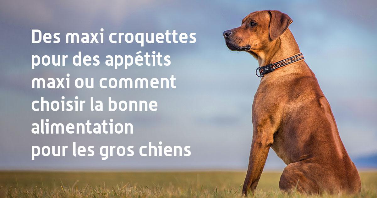 Des maxi croquettes pour des appétits maxi ou comment choisir la bonne alimentation pour les gros chiens